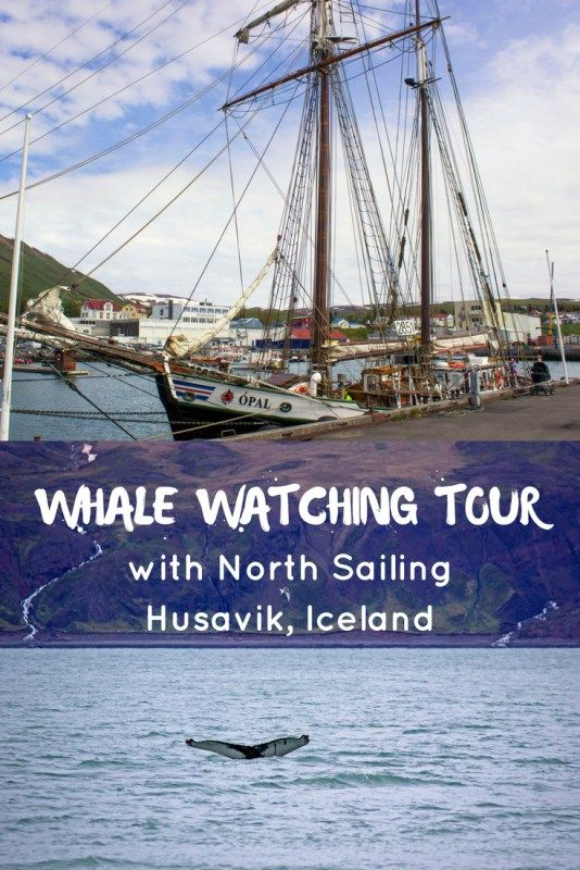 Whale Watching Tour with North Sailing in Husavik, Iceland