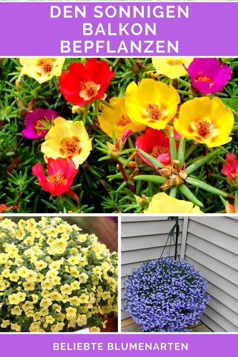 Vor allem der Balkon ist ein perfekter Ort, um mit dem Bepflanzen zu beginnen. Soweit, sogut. Nun stellt sicht aber die Frage, in welche Himmelsrichtung der Balkon zeigt und in Bezug darauf, welche Pflanzen sich wohl fühlen, wenn Sie den ganzen Tag von der Sonne beschienen werden und welche eher die schattigen Bereiche bevorzugen, an denen die Sonne seltener herankommt. Erfahren Sie in diesem Artikel, welche Arten von Balkonpflanzen für sonnigen Balkon geeignet sind.