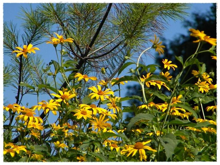 Yellow~Blue: Yellow Blue, Flowers