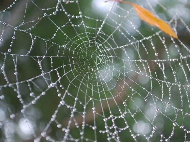 Zbavte se pavouci v domě na jednom, dvou nebo třech 0
