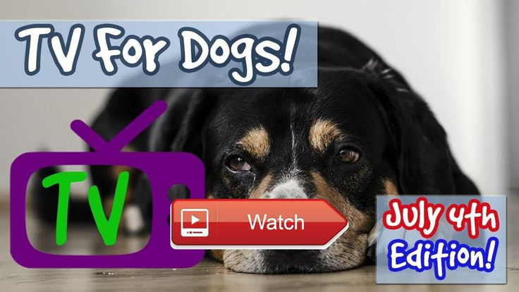 TV FOR DOGS JULY TH PLAYLIST TV Combined with Soothing Music for Dogs Scared of Fireworks  TV FOR DOGS JULY TH PLAYLIST TV Combined with Soothing Music for Dogs Scared of Fireworks Relax My Dog are experts