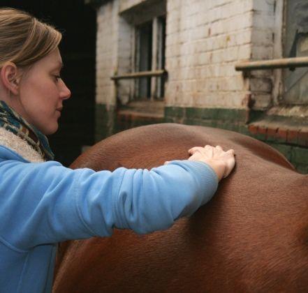 Ongeacht het niveau of de tak van de sport die je beoefend, wil je altijd dat jou paard gezond en soepel uit de voeten komt. Bij Coupony tref je nu een paardensportmassage met 37,5% korting. Dat betekend dat je nu slechts €25 betaald in plaats van €40!  http://www.coupony.nl/deals/paarden-sportmassage-roos