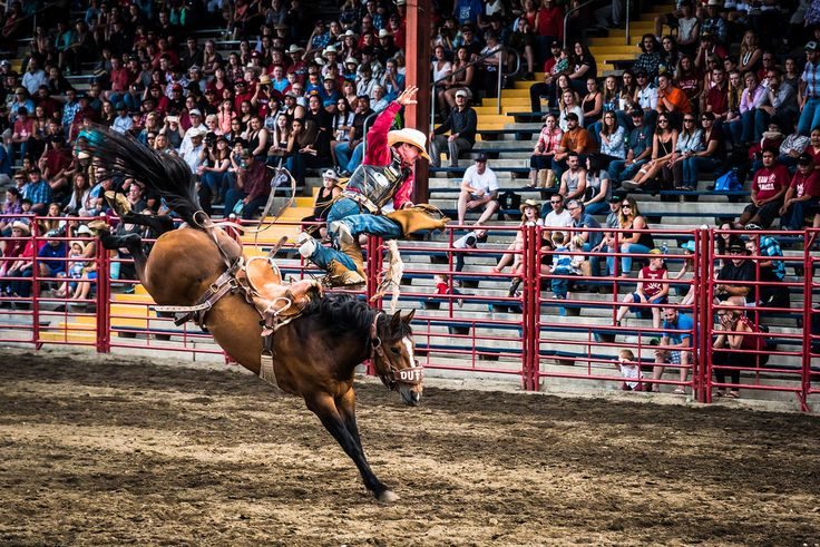 Full album of my photos from the 90th Williams Lake Stampede www.flickr.com/photos/akmitchell/albums/72157669458078680