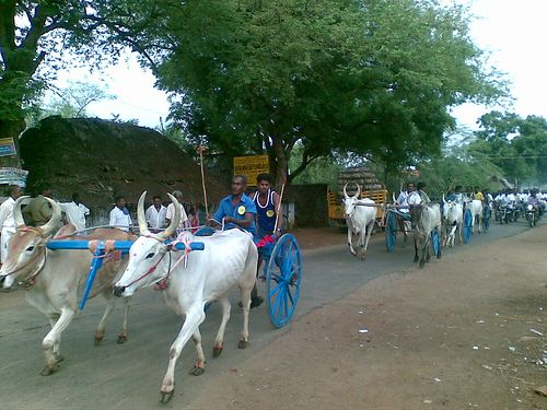 The 25 Best Ideas About Bullock Cart On Pinterest India Asia