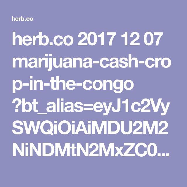 herb.co 2017 12 07 marijuana-cash-crop-in-the-congo ?bt_alias=eyJ1c2VySWQiOiAiMDU2M2NiNDMtN2MxZC00MTU2LWFiMmEtNzMzNDEwMjViNTgzIn0%3D