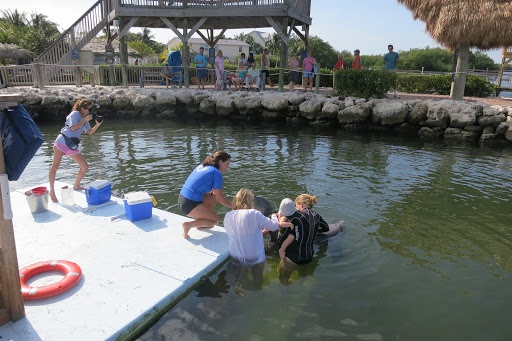 There's a small platform next to the dock where we stood to interact with the dolphins.  Because Jude is so young, it was a requirement that she be held on mother's hip.