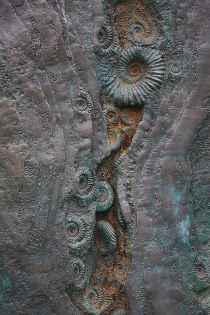 Ammonites are an extinct group of marine invertebrate animals in the subclass Ammonoidea of the class Cephalopoda. These molluscs are more closely related to living coleoids than they are to shelled nautiloids such as the living Nautilus species.