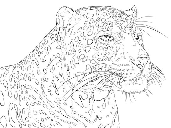 435 best Cats to Color images on Pinterest  Coloring books Adult