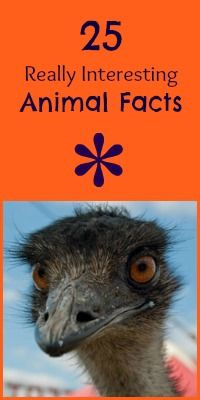 **betcha didn't know**  25 Really Interesting Animal Facts