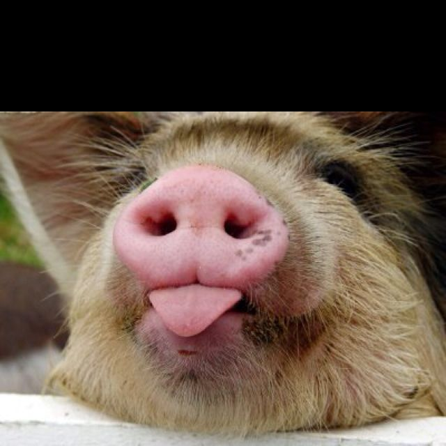 Look at this cute little piggy!