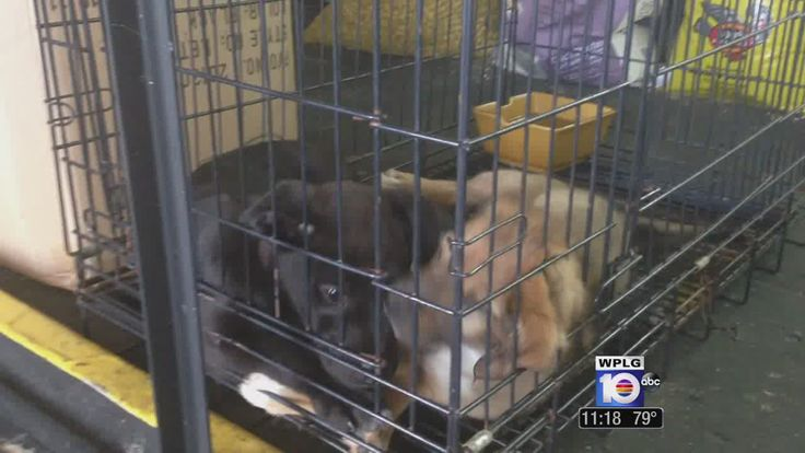 Swap Shop: Pet shop owner caught peddling dogs in Lauderhill | News  - Home