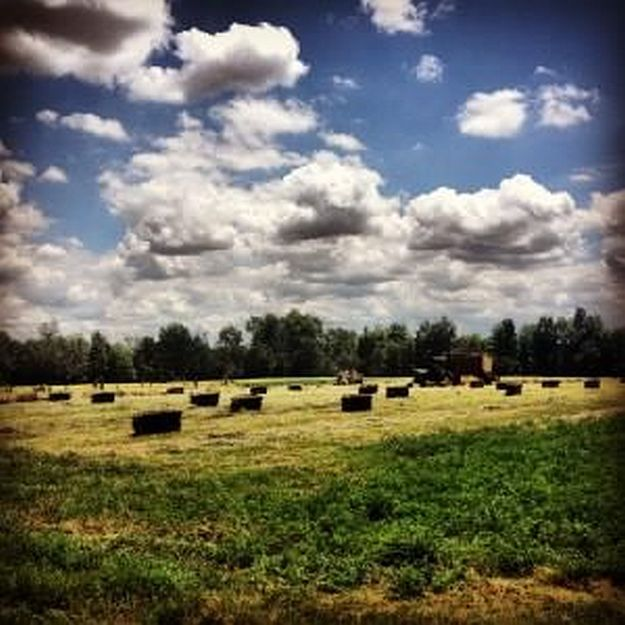 Want to know what types of farming suit your homestead? We've got you covered, from types of farming, planting, composting and raising different livestock.