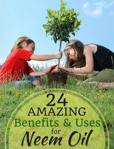 Benefits and uses for Neem Oil -- a natural remedy for dozens of plant problems!