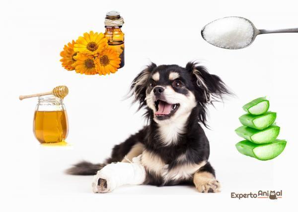 remedios caseros para perros con infeccion en el estomago