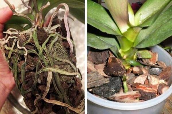 A szomszédom orchideái egész évben pompáznak, végre megtudtam