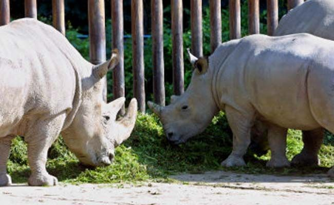 Union Science and Technology Minister Harsh Vardhan on Monday asked the Assam forest department to submit a scientific proposal to stop poaching of one-horned rhinos and protect the species in the state.