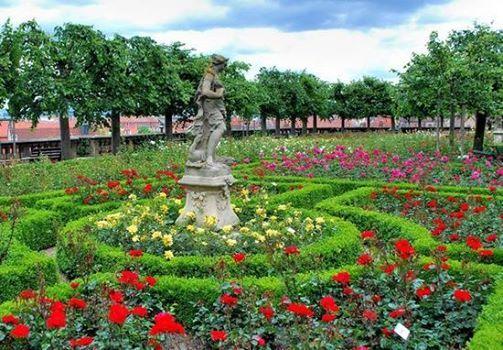 Bamberg Rose Garden, Germany.
