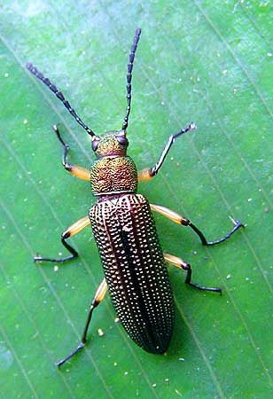 further Beetle Fancy likewise Wpe together with E B D E A D Creative Thinking Crabs additionally Past M. on beetle bugs insects