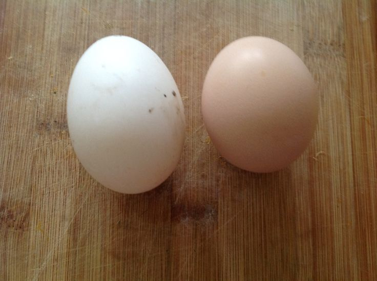 Duck egg and chicken egg.