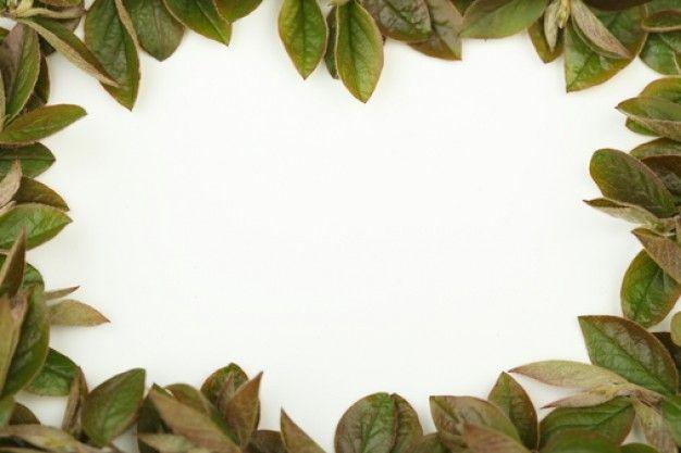 Caratulas de marcos de arboles imagui - Marcos para plantas ...