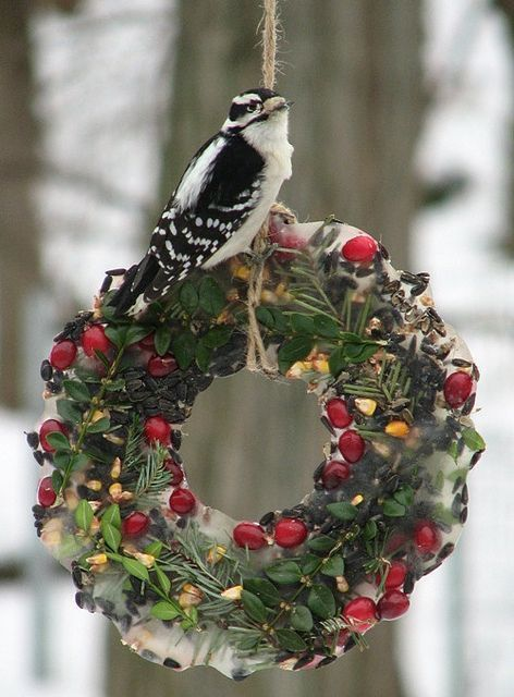 This looks like a wreath of greens and berries, frozen in water and hung outside. I see some ideas for feeding the Winter birds this way!