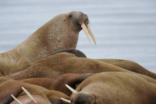 imagenes de areas naturales protegidas de peru