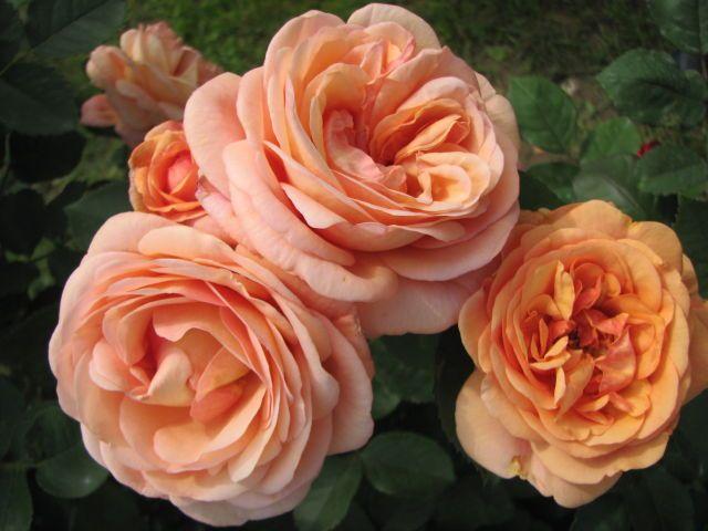 Выращивание цветов | Записи в рубрике Выращивание цветов | Дневник Nik2003 : LiveInternet - Российский Сервис Онлайн-Дневников