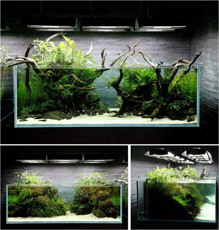fish tank landscapes