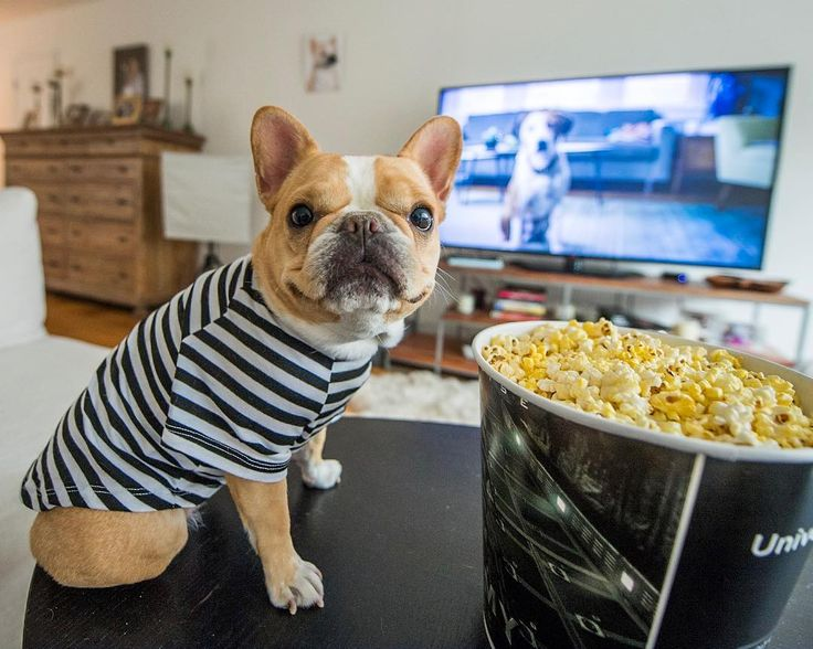 NYC: Join me and @chloetheminifrenchie at the exclusive screening of ABC's new show Downward Dog (@downwarddog_abc) — come watch the first episode and hang out with us. RSVP at the link in my bio. Tune in to the special premiere on May 17th #downwarddog #ad