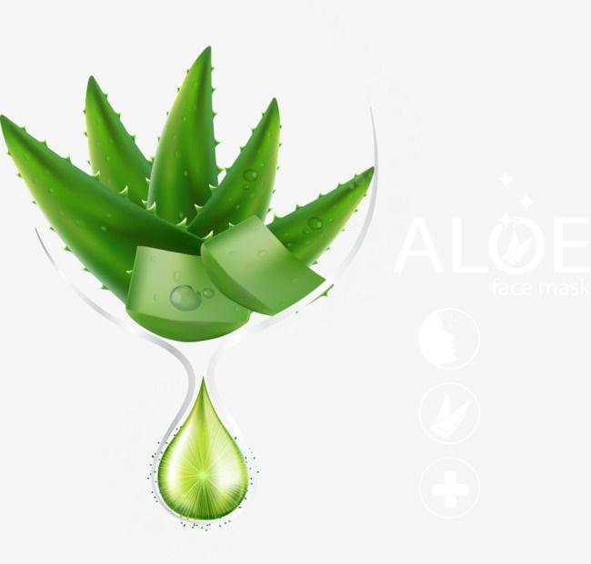 Vecteur Aloe Vera Aloe Vera Aloes Essentiel Fichier Png Et Psd Pour Le Telechargement Libre Aloes Aloe Vera Produits Forever