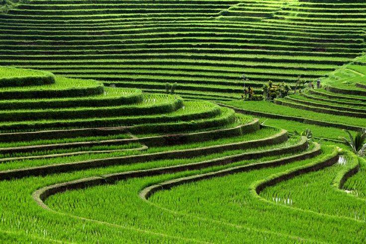 tripbucket | Dream: See Subak Irrigation System, Bali (UNESCO site)