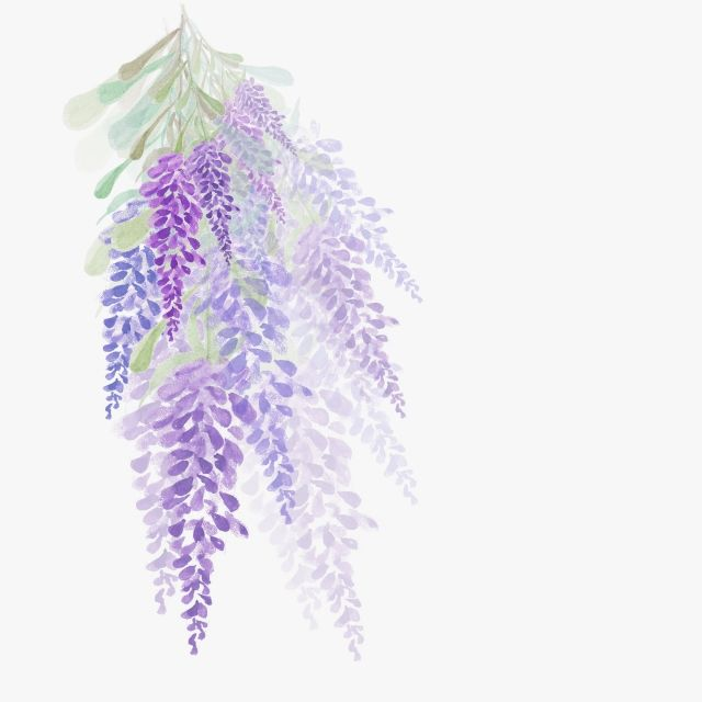 Watercolor Flowers Lavender Design Painting Purple Flowers Watercolor Petal Png Transparent Clipart Image And Psd File For Free Download Watercolor Flowers Vector Flowers Watercolor Flower Background
