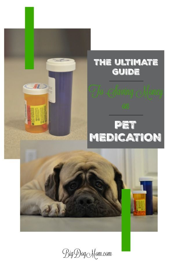 The Best Big Dog Owners Guide To Saving Money On Pet Meds 2019 Pet Meds Best Big Dogs Pet Insurance Reviews