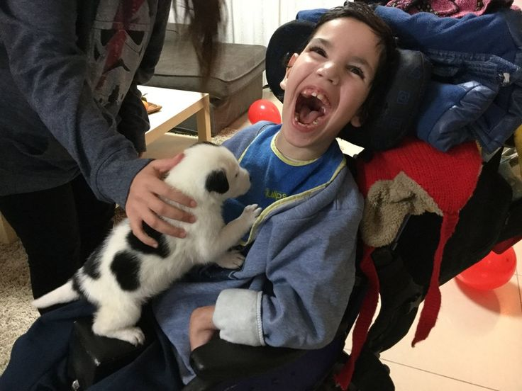 Natan Shai loves his animal therapy at school and also our pet dog at home, so I decided to write an article about animal therapy for special needs and how it can help our kids in so many different ways. It is actually quite a simple kind of therapy as you will see in the following post.