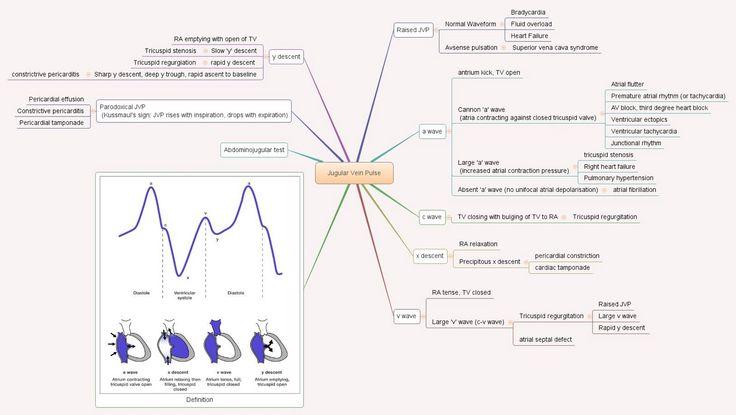 Jugular venous pulse   The jugular venous pressure (JVP)หรืออาจเรียกjugular venous pulse เป็นการดูpressure โดยตรงของหลอดเลือดดำ สามารถใช...