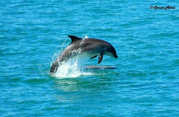 #zafaranaa #egypt #dolphin #colored #coral #nemo #crystal #water #sea #vacation