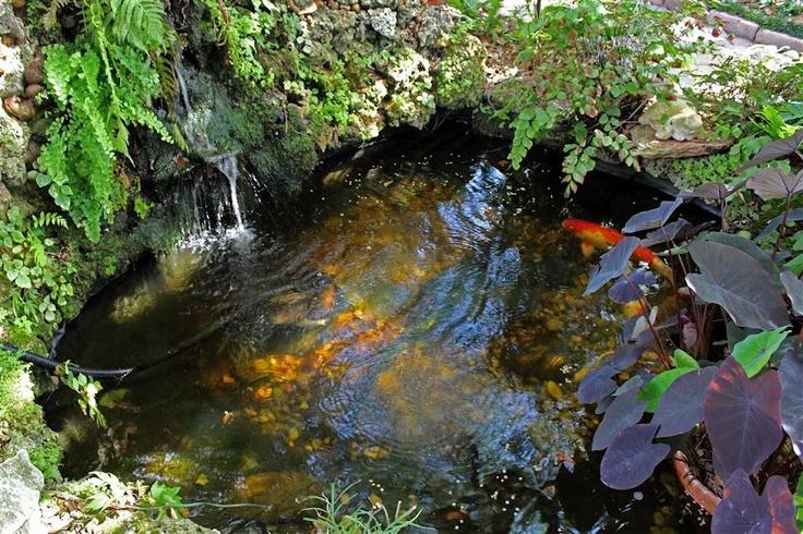 700 gallon koi pond planted pinterest koi ponds for Fish pond fertilization