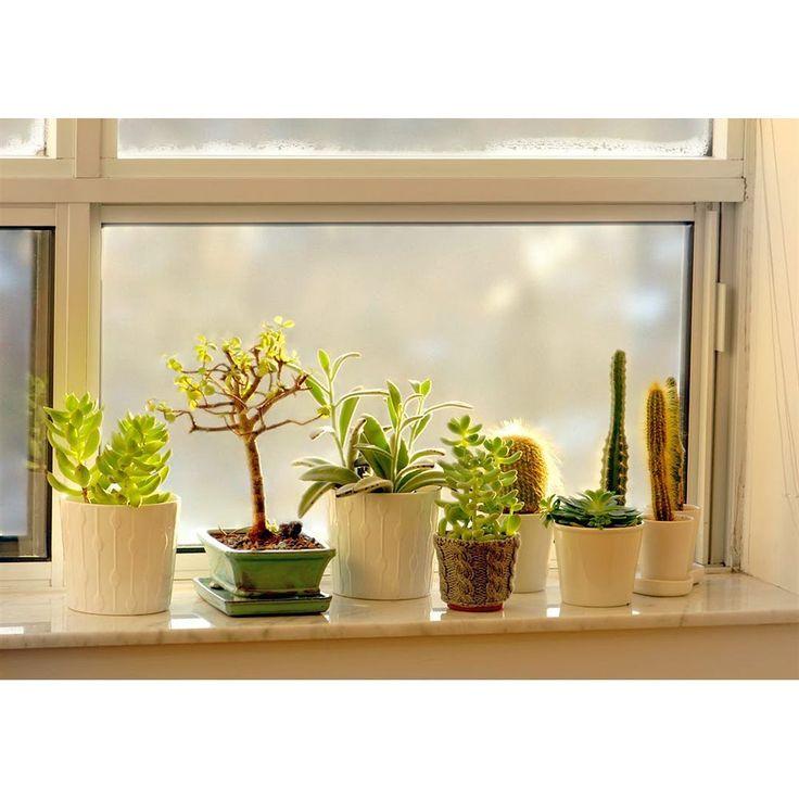 #Советагронома  Все растения живут в основном только за счет света. Его количество и является определяющим в выборе домашних любимцев. В помещениях это окна и искусственные источники (всевозможные лампы). Большинство цветов лучше всего себя чувствуют в районе окон где солнце бывает полдня до обеда или после. При такой освещенности можно легко выращивать 90% ассортимента растений предлагаемых в цветочных магазинах. Если у вас северное окно то выбор цветов становится чуть меньше. Если же…