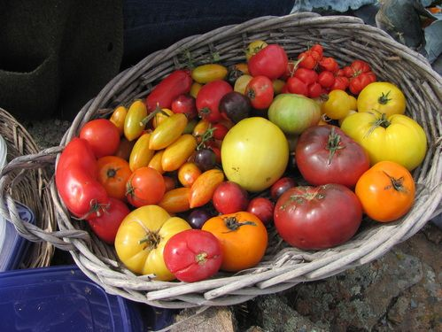 Great High Altitude Gardening Blog! Seed Saving And Seed Harvesting