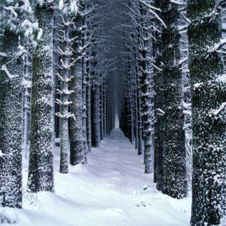 Sugarpine walk in winter