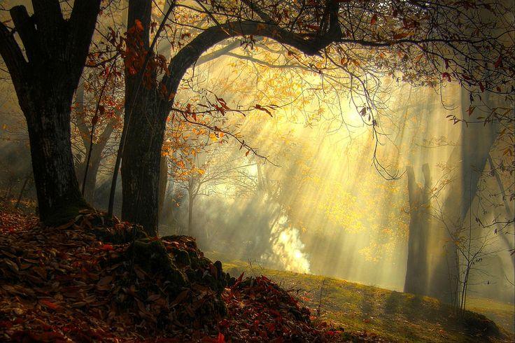 regenerating sensations autumn - Missano - ( zocca modena italy ) by primo masotti