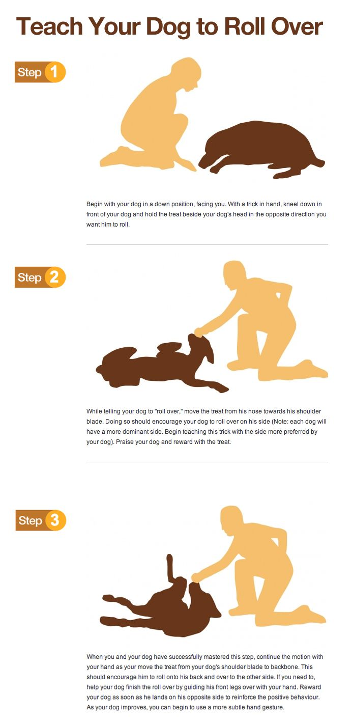 Teach your dog to roll over (help the dog learn the rolling over action, then add the verbal cue).