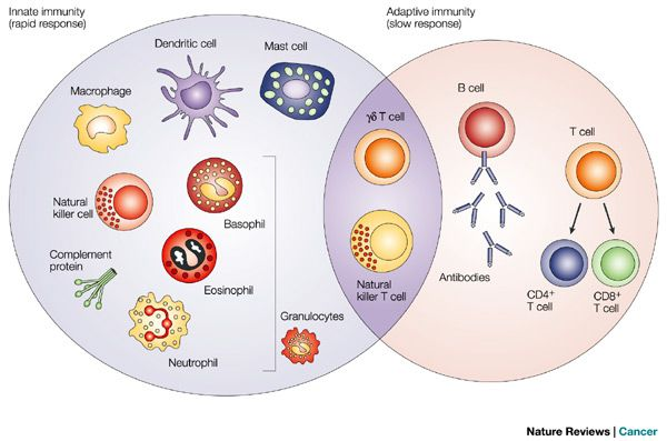 cells of the Human Immune system