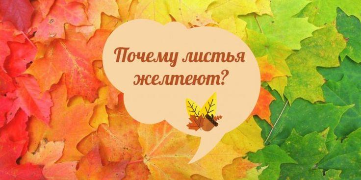 Наступает осень и появляются разноцветные листья на деревьях - почему? Веселая наука дает понятный ответ на самые интересные вопросы.