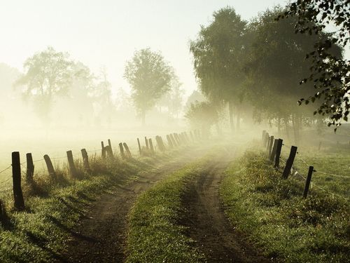 run into the sunlight.: The Roads, Ears Mornings, Paths, Country Roads, Mists, Back Roads, Farms, Misty Mornings, Dirt Roads