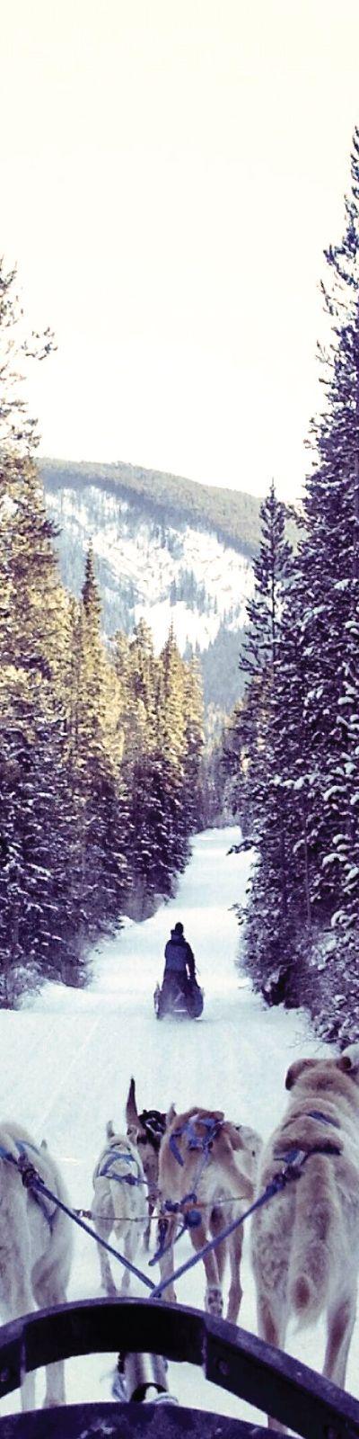 Oppleve en Hundekjøring  | En spennende opplevelse som huskes. Man suser gjennom vinterdekt skog, trukket av ivrige hunder og det kreves ingen erfaring for å kjøre selv. Desidert vinterens vakreste eventyr.