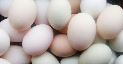 Sajtos tojáskrém   Femcafe
