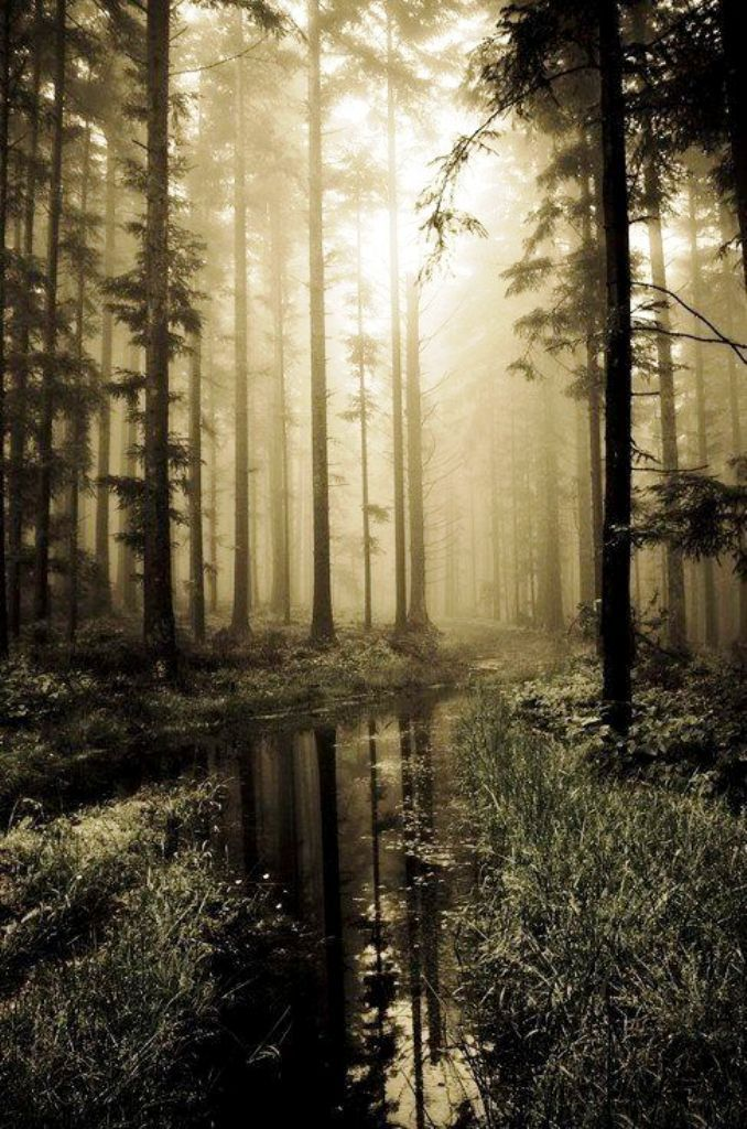 20 Forest Photography Ideas For Your Inspiration Inspired Luv Forest Photography Landscape Photography Beautiful Nature