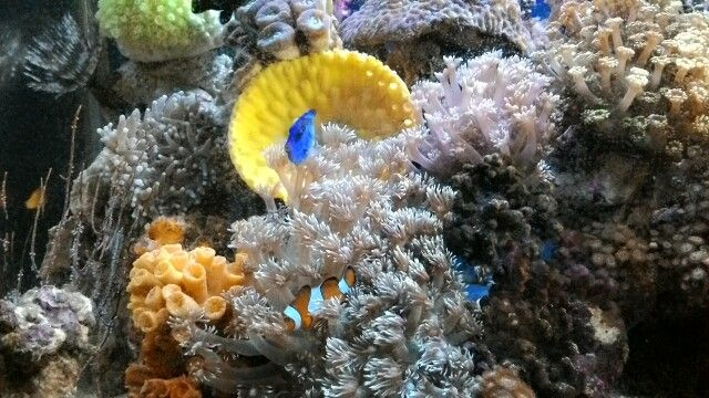 Nemo and Dori