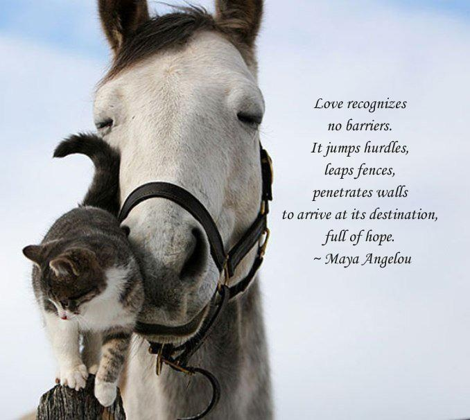 Horses and cats seem to understand one another.